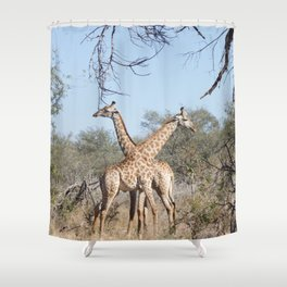 Two Giraffe in the Kruger National Park Shower Curtain