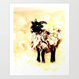 Ewe with Highlights Art Print