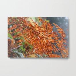 Orange Humboldt Fern Metal Print