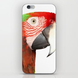 A Beautiful Bird Harlequin Macaw Portrait Background Removed iPhone Skin