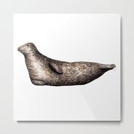 Grey seal Metal Print