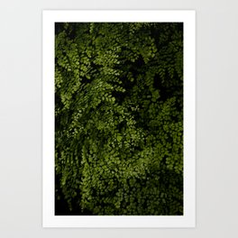 Small leaves Art Print