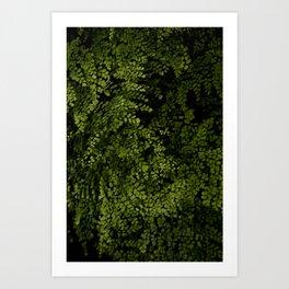 Small leaves Kunstdrucke