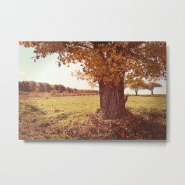 Country Comfort Metal Print