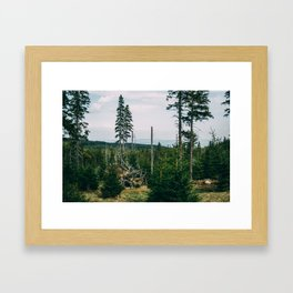 Evergreen Mountain Forest Framed Art Print
