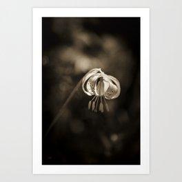 Grace a beautiful wildflower Turks Cap lily Art Print