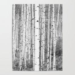 Aspen Trees in Black & White Poster