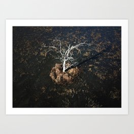 A lone tree in the marsh Art Print