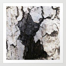 bark abstact no1 Art Print