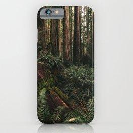 Redwood Forest Floor iPhone Case