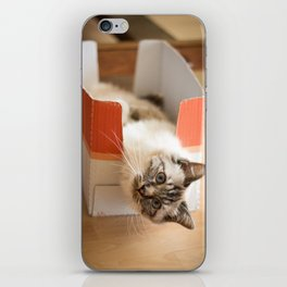 The cute cat in the box iPhone Skin