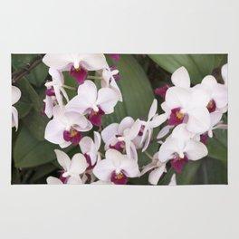 Longwood Gardens Orchid Extravaganza 1 Rug