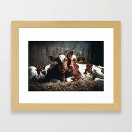 Bovine Friends Framed Art Print