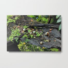 Snail Shell Aftermath Metal Print