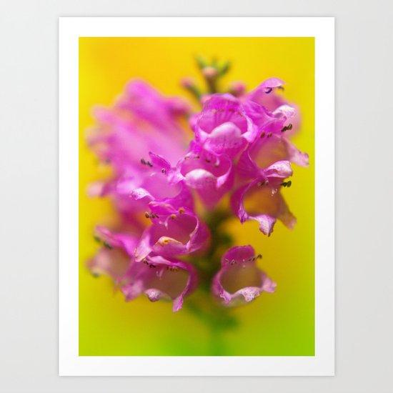 morning walk flower Art Print