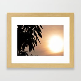 Mango Framed Art Print