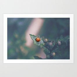 Coccinellidae Art Print