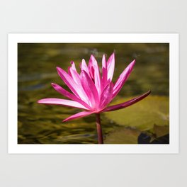 Peace & Hope via Waterlily by Reay of Light Art Print