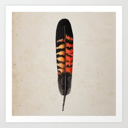 Red Tailed Black Cockatoo Feather Art Print