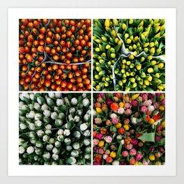 Tulips from Holland - orange & yellow Art Print