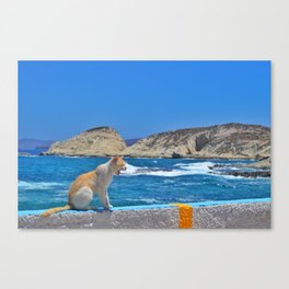 Cats of the Cyclades  Canvas Print