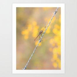 dragonfly_07b Art Print