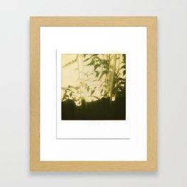 Plant Shadows Framed Art Print