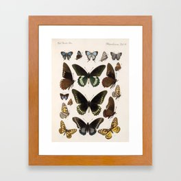 Vintage Scientific Insect Butterfly Moth Biological Hand Drawn Species Art Illustration Framed Art Print