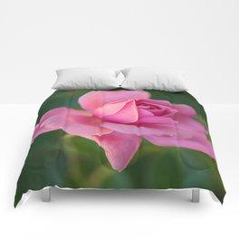 Beautiful Pink Rose Comforters