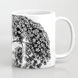 Sambucus canadensis 1906 Coffee Mug