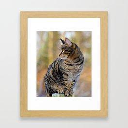 PAWSTURE Framed Art Print