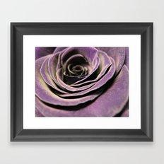 Purple velvet rose Framed Art Print