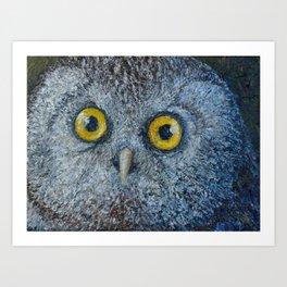 Boreal Owl (Aegolius funereus) Art Print