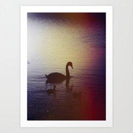 Swan Art Print