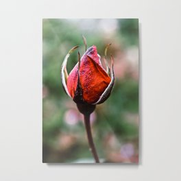 Gather Ye Rosebuds Metal Print