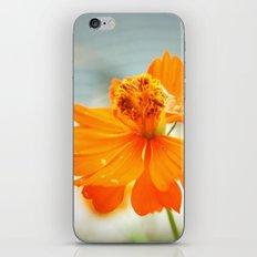Wildflower iPhone & iPod Skin