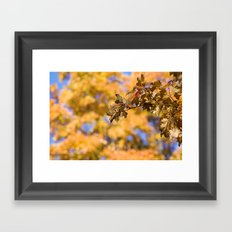 Autumn Orange Backdrop Framed Art Print