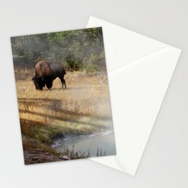 Buffalo at Thermal Pool Stationery Cards