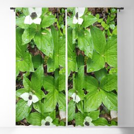 Canadian bunchberry Blackout Curtain