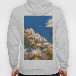 Macro of blooming Aesculus Hoody