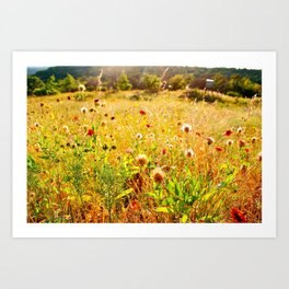 (Texas) Field of Dreams Art Print