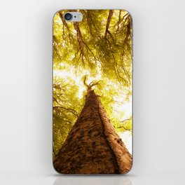 Forest in spring iPhone Skin