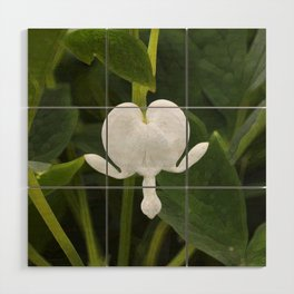 White (not bleeding) Heart Wood Wall Art