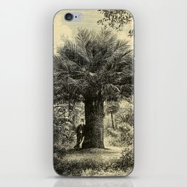 The Coqaito Nut or Wine Palm iPhone Skin
