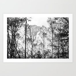 Black and white tree photography - Watercolor series #5 Art Print