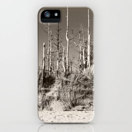 Dead Trees On The Beach iPhone Case