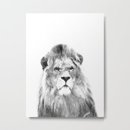 Black and white lion animal portrait Metal Print