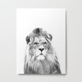 Black and white lion animal portrait Metal Print