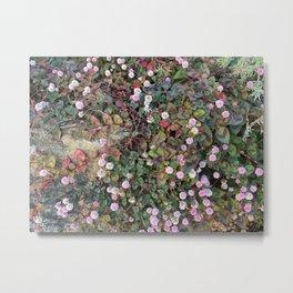Tiny pink flowers Metal Print
