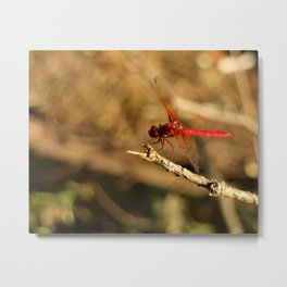 Red Dragonfly Really Close Metal Print